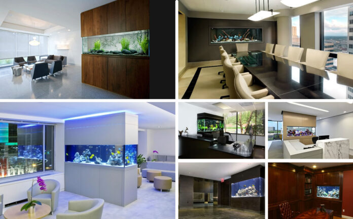 fish at home and office