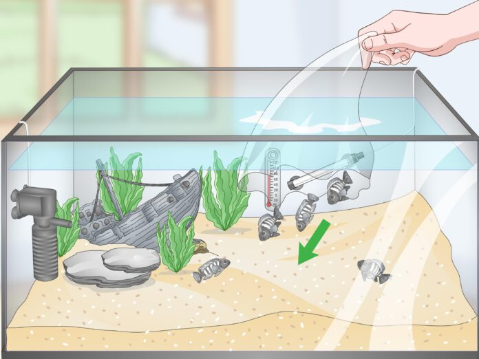 guide to build a fish tank