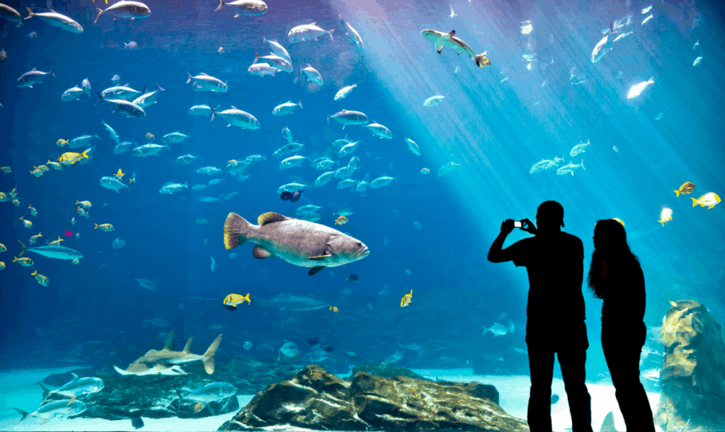 georgia aquarium regular shows