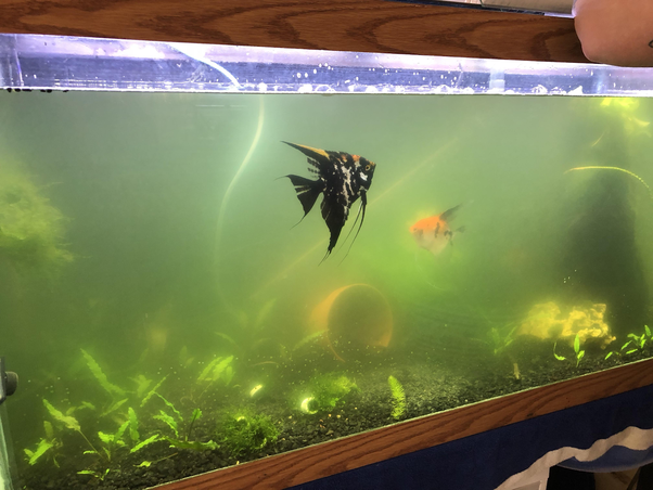 Why the Fish Tank Water is Cloudy?